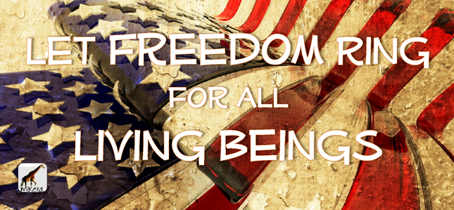 let freedom ring 645x